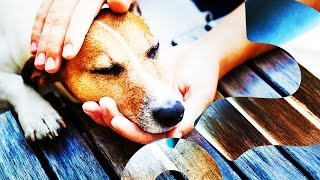 Your Dog Probably Loves You AT LEAST as Much as Food | HowStuffWorks NOW