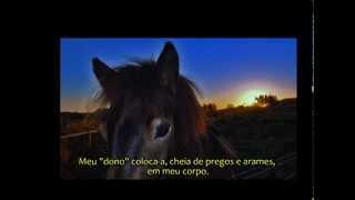 Oração do cavalo.