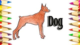 How to Draw a Doberman Pinscher (Dog) - Animal Drawing - SLD