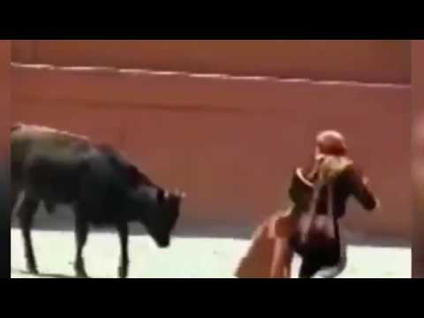 Diminutive female bullfighter is mounted by huge bull