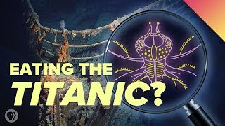 Extreme Microbes Are Eating The Titanic