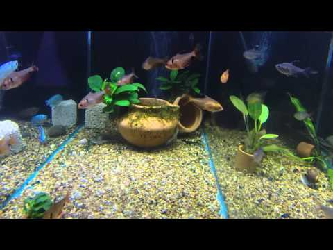 What Sort Of Plants Can You Keep With Goldfish