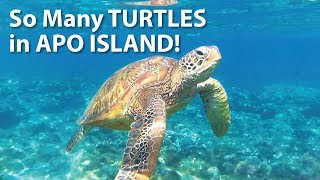 Swimming with TURTLES in APO ISLAND, Philippines (2018)