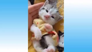 Cute Pets And Funny Animals