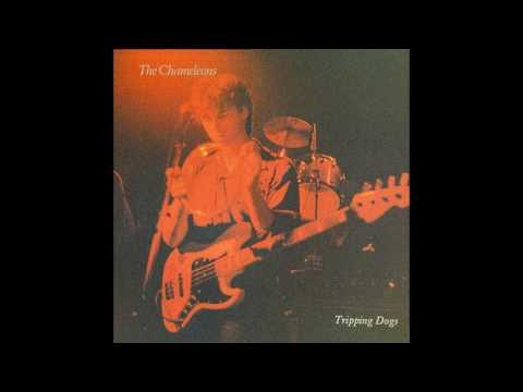 The Chameleons - Tripping Dogs (Full LP)