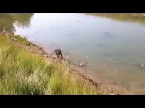 Fishery Creek 2
