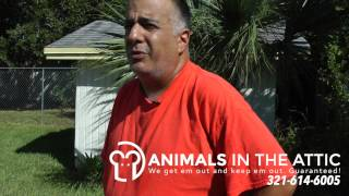 Rat Removal, Rodent Extermination, Food Sources, Melbourne Fl 321-614-6005 Animals In The Attic