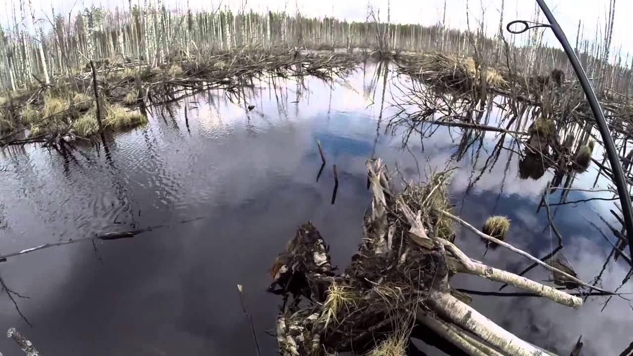 рыбалка на реке нива карелия