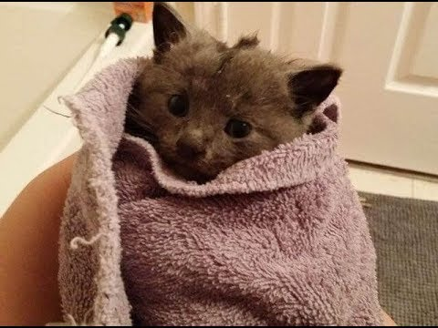 This Kitten Was Stuck In A Deep Storm Drain Crying For Help, See What Happens Next