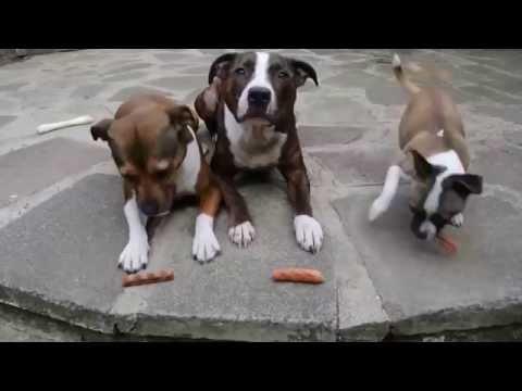 Приколы про животных видео смотреть онлайн на ютуб