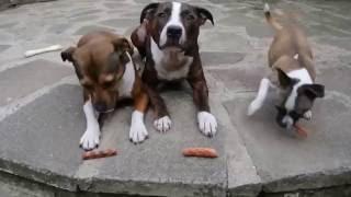 Приколы с животными, смешные видео, шутки с животными
