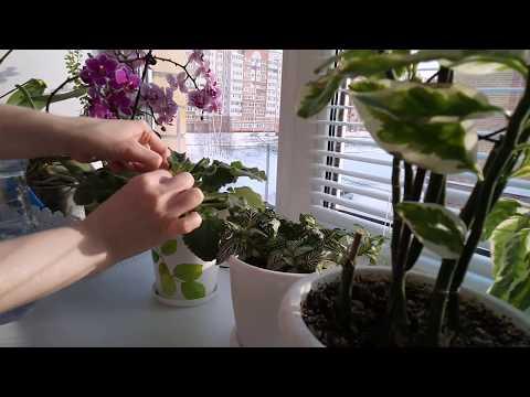 Вопрос: Как правильно ухаживать за комнатными растениями?