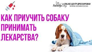 Как правильно приучить собаку принимать таблетку или жидкое лекарство?
