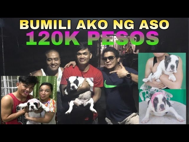 I BOUGHT A PUPPY WORTH 120K (EXOTIC BULLY)