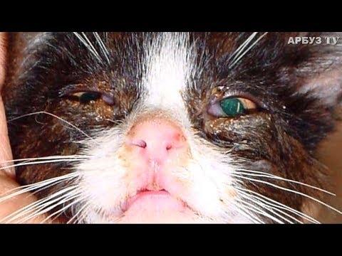 Вопрос: Зачем мама-кошка откусывает усы маленьким котятам?