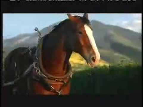 Bud light clydesdale commercial americanwarmoms bud light clydesdale commercial aloadofball Choice Image