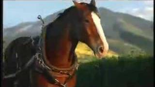 Budweiser Rocky Horse Superbowl Commercial