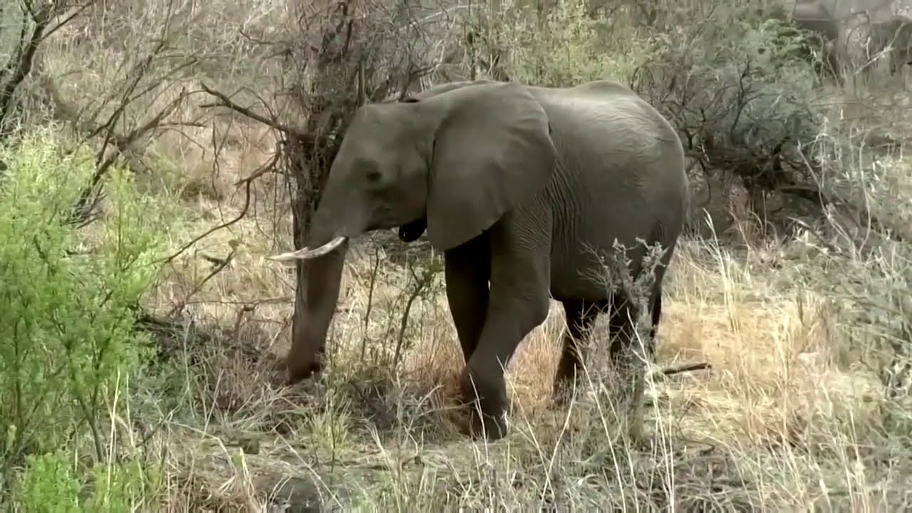 Zimbabwe suspects bacteria caused elephant deaths - Reuters