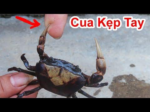 Cách Làm Cua Không Bao Giờ Bị Cua Kẹp Cực Hay / Mẹo Làm Cua Không Bị Kẹp . Great tip for crabs