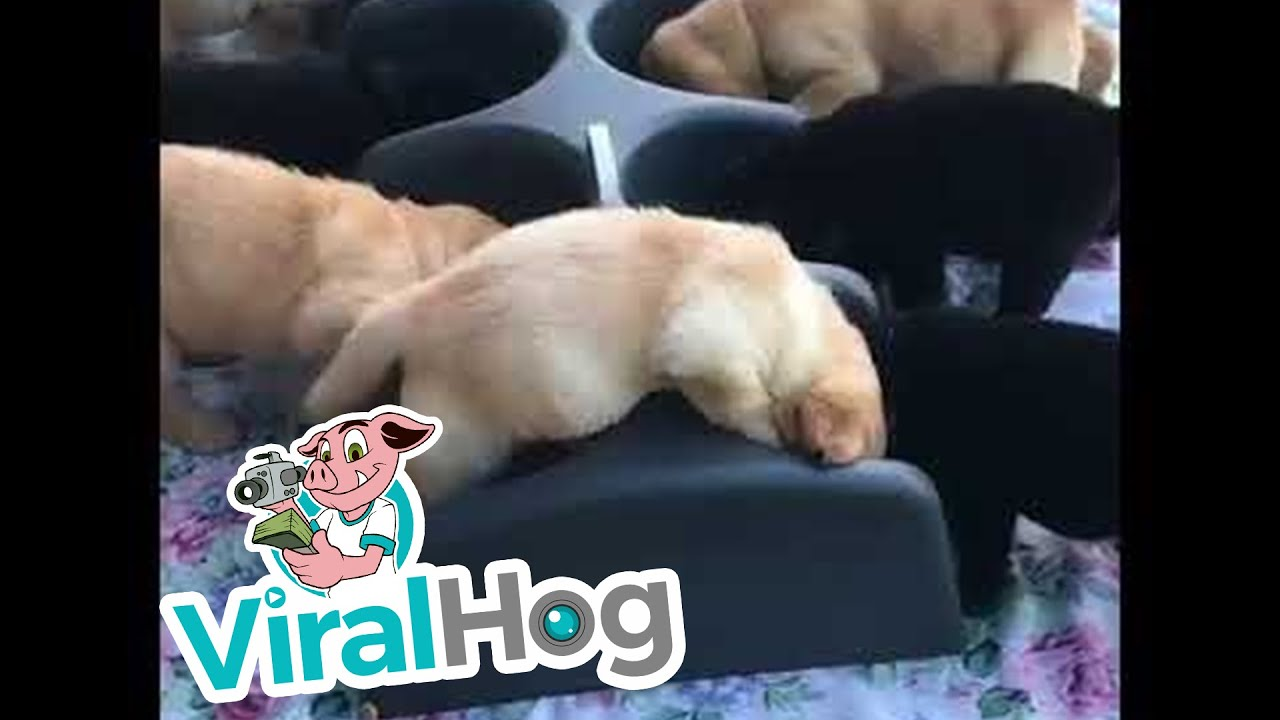 Puppies Don't Share Well || ViralHog