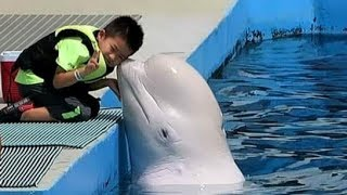 Dolphin kisses the Kids _White Dolphin and Kids
