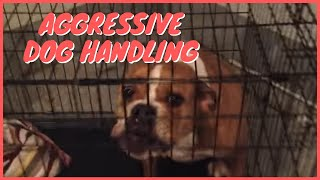 Aggressive Dog Handling  Solid K9 Training