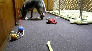 普段遊んでいるおもちゃを全部床にばら撒いてみました。