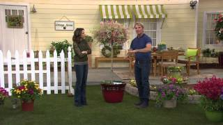 Cottage Farms Pink Princess Willow Tree with Rachel Boesing