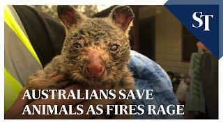 Australians save animals as fires rage