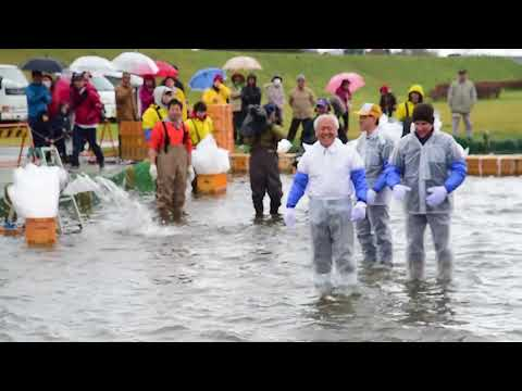 Team Misawa particapates in 2017 Oirase salmon catching festival