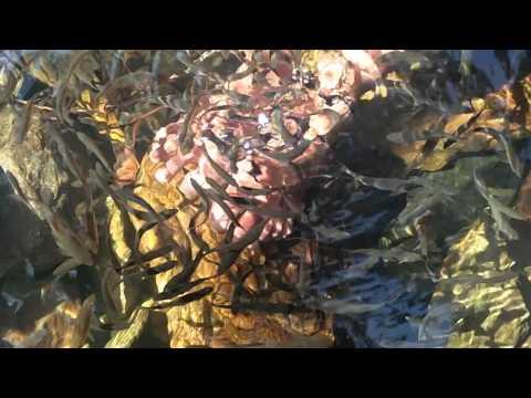 Nagalapuram Pools Fishes