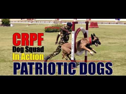 CRPF Warrior Dog's