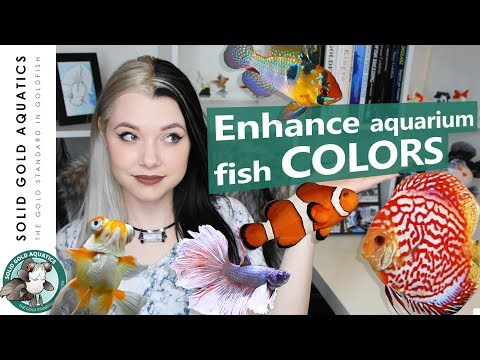 COLOR ENHANCING Tips For Fish!