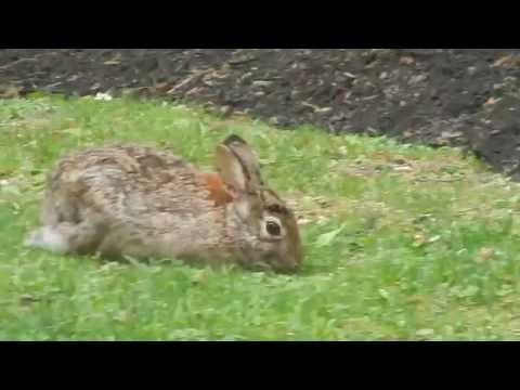 Rabbit in Kendall Square, Cambridge