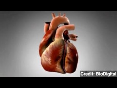 'Gut Bugs' Could Cause Heart Disease