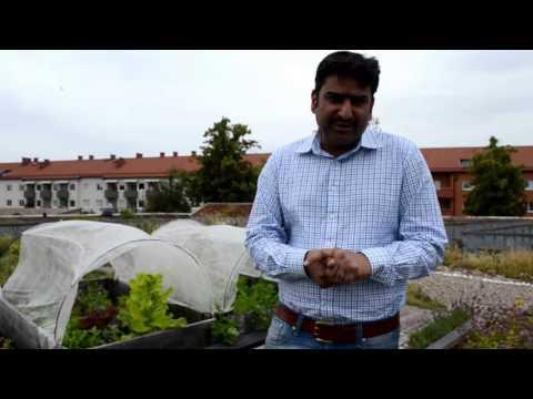 Green Roof Augustanborg Malmo Sweden Urdu