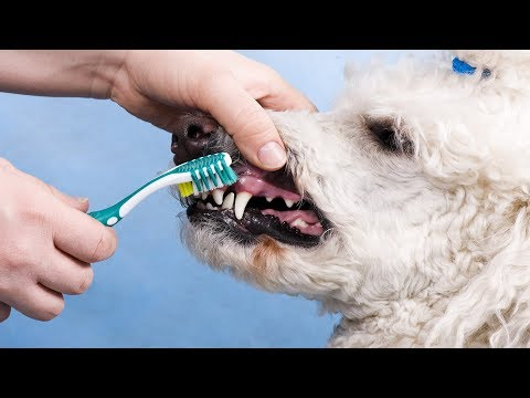 DON'T CLEAN YOUR DOGS TEETH UNTIL YOU SEE THIS!