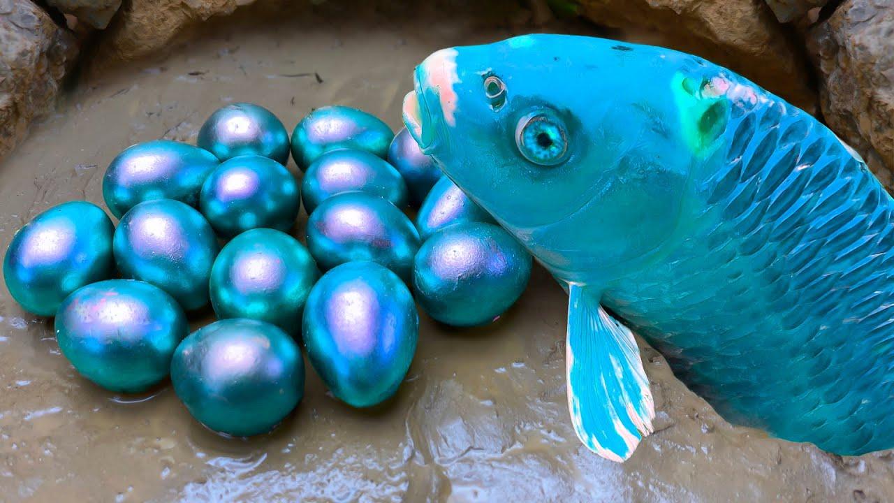푸른 물고기는 아름다운 푸른 알을 낳는다/ 스톱모션 요리 & Cooking ASMR Funny Video