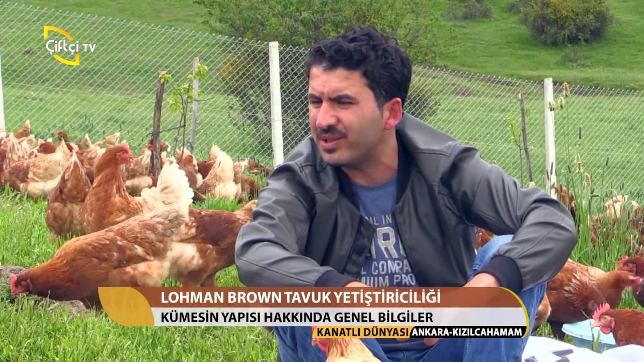 Download Kanatlı Dünyası-Lohman Brown Tavuk Yetiştiriciliği