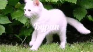 Память о Буране [Коты Воители]