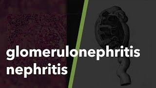 Wat is een glomerulus en wat gebeurt bij glomerulonefritis?.