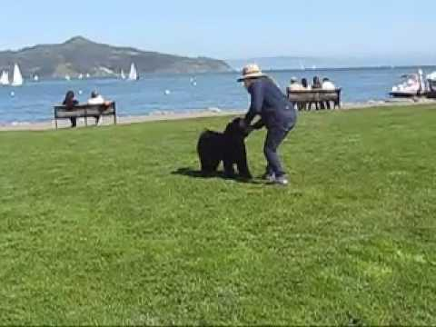 How To Train Your Portuguese Water Dog To Be Good
