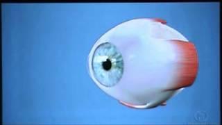 Esclera - Visare Hospital de Olhos