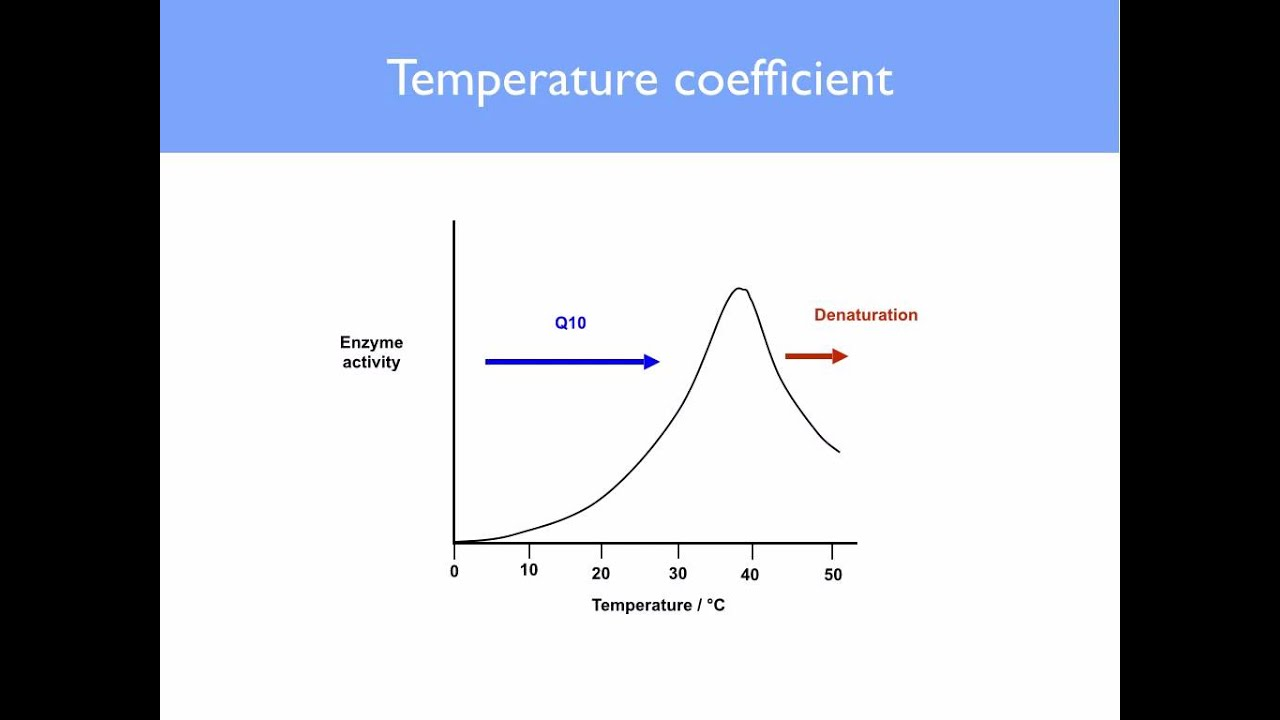 effect temperature has enzyme activity Biology: experiment- the effect of temperature on the enzyme rennin 1881 words | 8 pages aim: the aim of the experiment is to test the effect temperature has on the activity of the enzyme rennin.