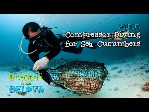 Risking Your Life: Compressor Diving For Sea Cucumbers [4K] | Indonesia From Below (S01E05) | SZtv