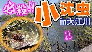 【 バス釣り 攻略】春バス攻略は小沈虫で!覚えて損しない必殺釣り方を伝授します。Bass