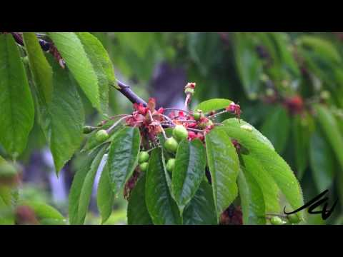 Food Security Should be a Top Priority and Crazy Okanagan Weather  - YouTube