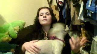 I Groomed My Dog!