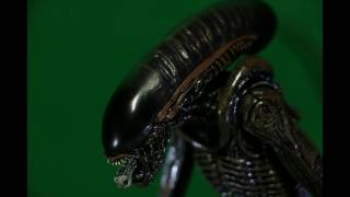 Stop Motion | Green Screen Xenomorph