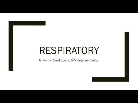 Respiratory Anatomy, Dead Space, & Minute Ventilation